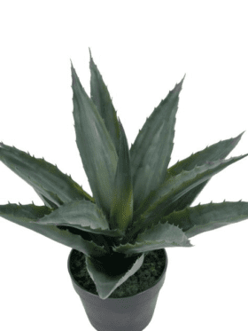 Mr. Plant Agave 1071-90-1