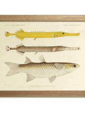 The Dybdahl & Co. Fish Print #RC022