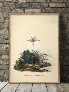 The Dybdahl & Co Botanical Palm Print #3535