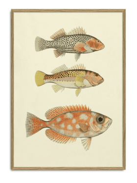 The Dybdahl & Co The Fishes Print #3901P