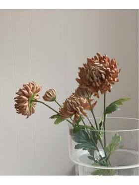 Mr. Plant Chrysanthemum 60 cm